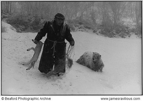 Ivor Brock rescuing a lamb in a blizzard, Millhams, Dolton, Devon, England, 1978