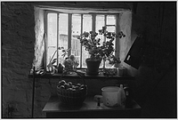 Farmhouse window with apple basket, Langham, Dolton, Devon, England, 1985