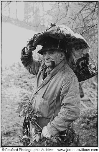 Archie Parkhouse with ivy for sheep, Millhams, Dolton, Devon, England, 1975